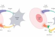 【肺癌治疗】不同免疫检查点抑制剂在非小细胞肺癌的安全性比较