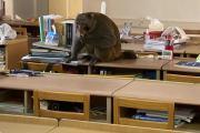"""苏州一大学内山猴""""不请自来"""" 学校:勿轻易投喂"""