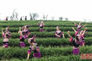 第二届长龙茶山文化节在连江举办