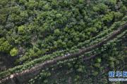 陕西吴起:让黄土高坡披彩挂绿